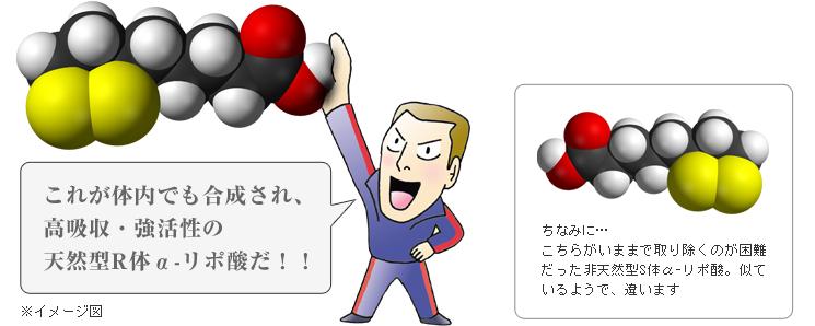 これが体内でも合成され、高吸収・強活性の天然型R体αリポ酸だ!